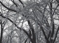 Ice Storm__4